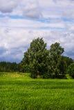 Dia ensolarado da mola no campo verde Fotografia de Stock