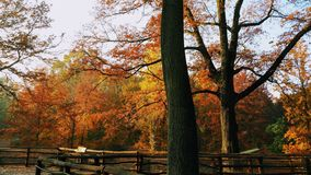 Dia ensolarado de surpresa do outono na floresta fotos de stock