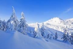 Dia ensolarado do inverno frio Misterioso, secreto, fantástico, mundo das montanhas No gramado coberto com a neve as árvores agra imagem de stock royalty free
