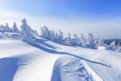 Dia ensolarado do inverno frio Misterioso, secreto, fantástico, mundo das montanhas No gramado coberto com a neve as árvores agra foto de stock royalty free
