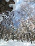 Dia ensolarado do inverno na floresta Fotos de Stock Royalty Free