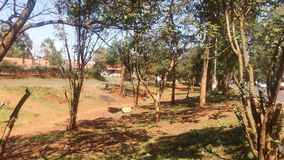Dia ensolarado do miti das árvores em Nairobi foto de stock