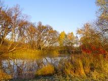 Dia ensolarado do outono no lago de madeira Imagem de Stock Royalty Free