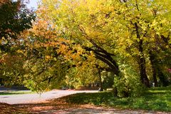 Dia ensolarado do outono no parque Fotografia de Stock