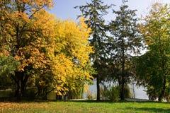 Dia ensolarado do outono no parque Imagem de Stock Royalty Free