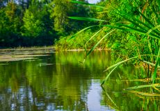 Dia ensolarado em um rio calmo no verão Foto de Stock Royalty Free