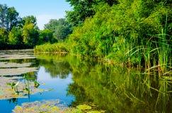 Dia ensolarado em um rio calmo no verão Fotografia de Stock Royalty Free