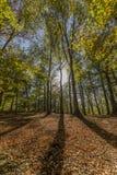 Dia ensolarado fantástico do outono com a luz solar que vem através das árvores fotografia de stock