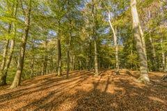 Dia ensolarado fantástico do outono com a luz solar que vem através das árvores imagens de stock royalty free