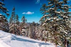 Dia ensolarado gelado na floresta do inverno Imagens de Stock