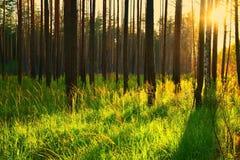 Dia ensolarado na floresta Fotografia de Stock Royalty Free