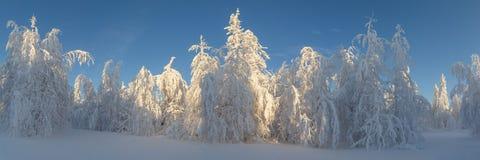 Dia ensolarado na floresta do inverno, montanhas ural, floresta do inverno, natu do russo fotografia de stock royalty free