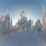 Dia ensolarado na floresta do inverno, montanhas ural, floresta do inverno, natu do russo imagens de stock
