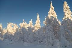 Dia ensolarado na floresta do inverno, montanhas ural, floresta do inverno, natu do russo fotos de stock