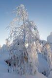 Dia ensolarado na floresta do inverno, montanhas ural, floresta do inverno, natu do russo foto de stock