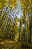 Dia ensolarado na floresta do outono fotografia de stock