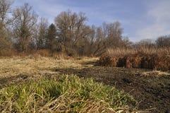 Dia ensolarado na planície de inundação do rio de Dnieper foto de stock