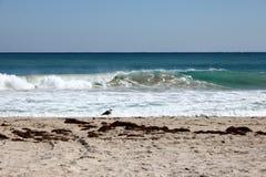 Dia ensolarado na praia de Florida com gaivota solitária Fotografia de Stock