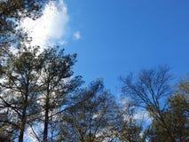 Dia ensolarado nas madeiras Foto de Stock Royalty Free