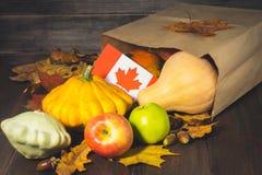 Dia feliz da ação de graças em Canadá Folhas dos vegetais, das abóboras, da polpa, das maçãs, do bordo e do carvalho, bolotas em  Imagens de Stock