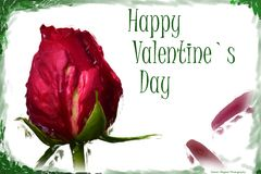 Dia feliz do ` s do Valentim de Rosa Foto de Stock