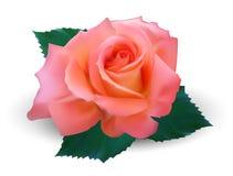 Dia feliz dos Valentim Ilustração altamente realística Imagem de Stock Royalty Free