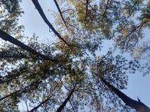 dia feliz na floresta do pinho imagem de stock