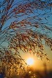 Dia glorioso - expora ao sol a aumentação em uma manhã fresca do verão Fotografia de Stock Royalty Free