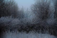 Dia muito frio, as árvores na escarcha Foto de Stock