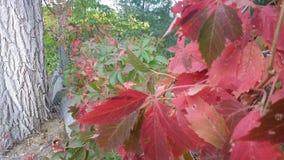 Dia nebuloso do trajeto vermelho da queda da videira Imagem de Stock Royalty Free