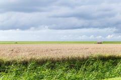 Dia nebuloso em um campo holandês, Pieterburen Foto de Stock