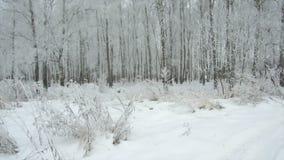 Dia nebuloso gelado da floresta do inverno vídeos de arquivo