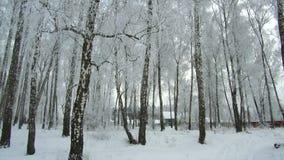 Dia nebuloso gelado da floresta do inverno filme