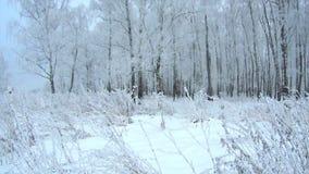 Dia nebuloso gelado da floresta do inverno video estoque