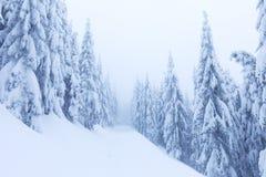 Dia nebuloso gelado em árvores nevados da floresta do abeto vermelho da montanha na tempestade de neve Tiro cinemático de um bliz fotos de stock