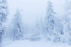 Dia nebuloso gelado em árvores nevados da floresta do abeto vermelho da montanha na tempestade de neve Tiro cinemático de um bliz foto de stock