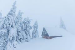 Dia nebuloso gelado em árvores nevados da floresta do abeto vermelho da montanha na tempestade de neve Tiro cinemático de um bliz fotografia de stock