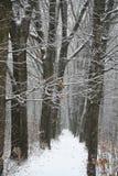 Dia nevado Fotos de Stock