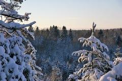 Dia nevado, ensolarado e frio nas madeiras fotografia de stock