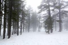 Dia nevoento do inverno foto de stock royalty free