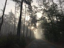 Dia nevoento do outono na floresta imagem de stock royalty free