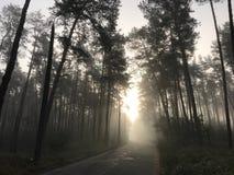 Dia nevoento do outono na floresta fotos de stock