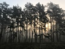 Dia nevoento do outono na floresta imagens de stock