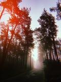 Dia nevoento do outono na floresta fotografia de stock