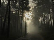 Dia nevoento do outono na floresta fotos de stock royalty free