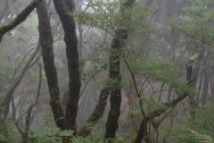 Dia nevoento em uma floresta tropical na ilha de Madeira fotografia de stock