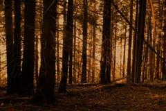 Dia nevoento na floresta imagens de stock royalty free