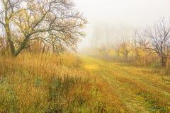 Dia nevoento na floresta do outono fotografia de stock