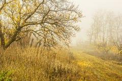 Dia nevoento na floresta do outono fotografia de stock royalty free