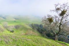 Dia nevoento nos montes da serra conserva do espaço aberto da vista, sul San Francisco Bay, Califórnia fotos de stock